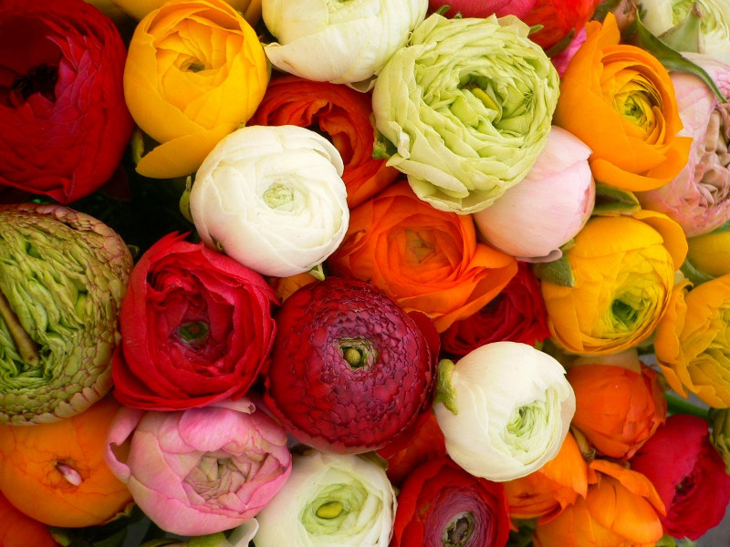 Floral Dictionary: Ranunculus