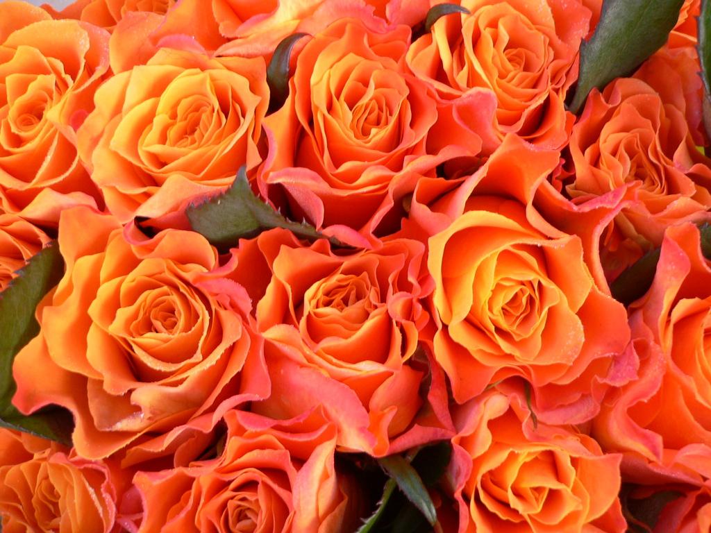 Dozen Colored Roses Flor Amor